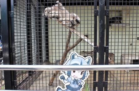 東武動物公園さん「けもフレ」コラボがよかったのか、ノリノリになる! 新グッズの開発や追加のコラボイベントも企画中とのこと