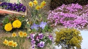 1春の花のコラージュ