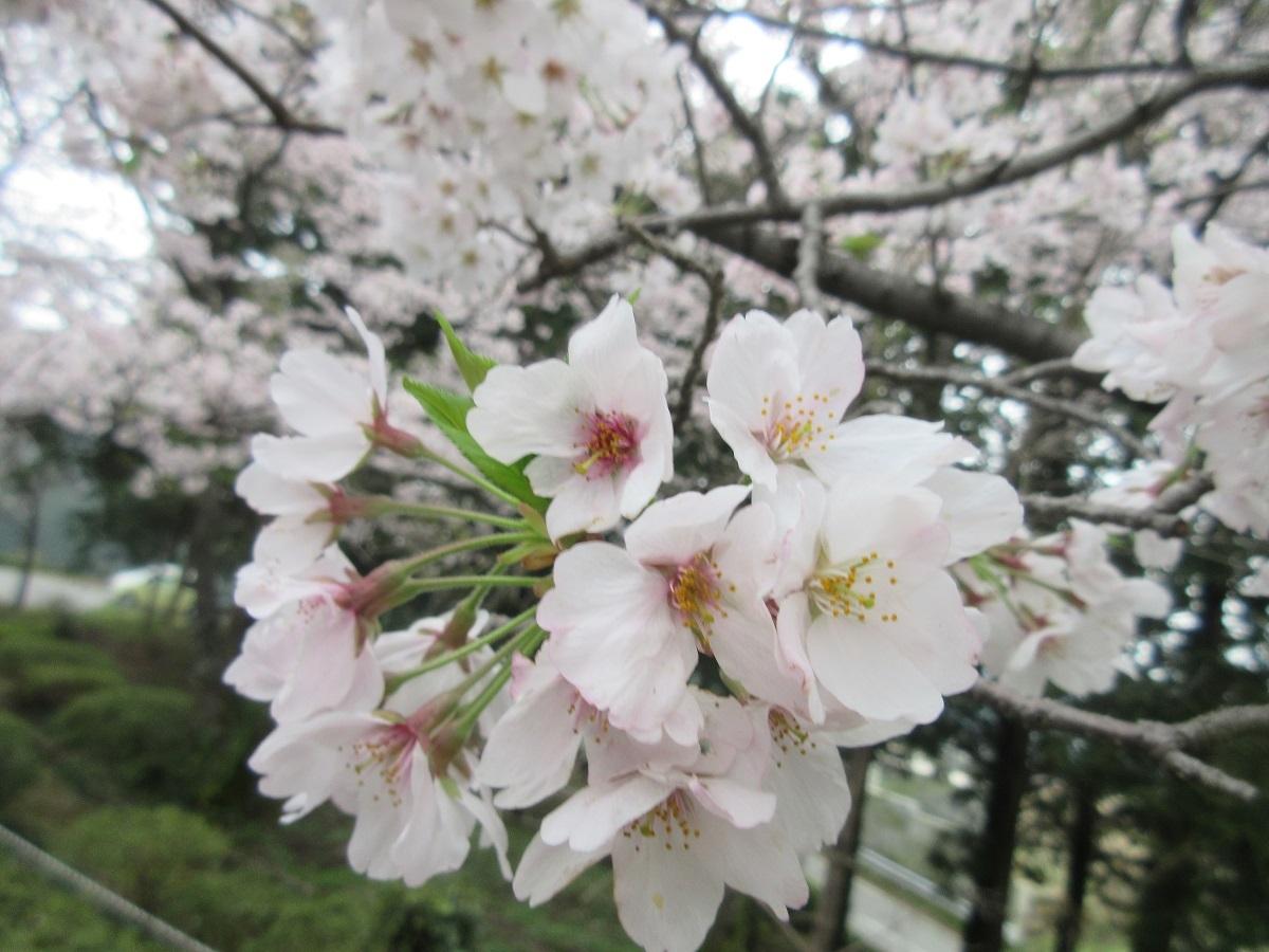 IMG_2293花