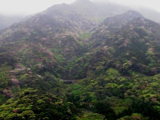 新緑の山 (1)