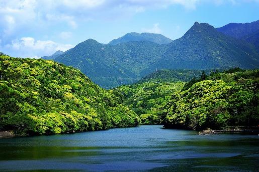 安房川河口の新緑