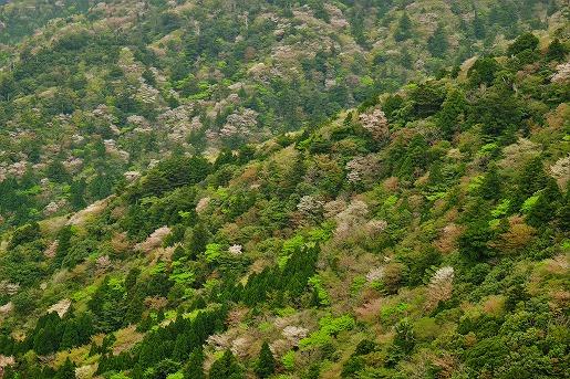 太鼓岩からの眺め(4月18日)