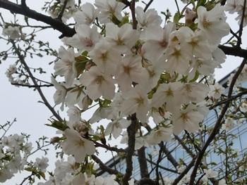 2HAT神戸桜