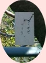 桜の写真(上大岡2)