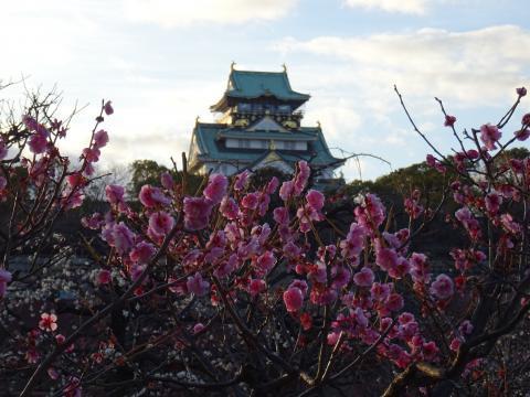 2017年2月24日 大阪城公園梅林