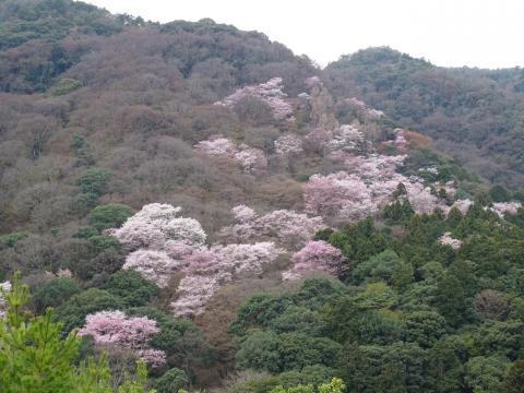 2017年4月6日 嵐山