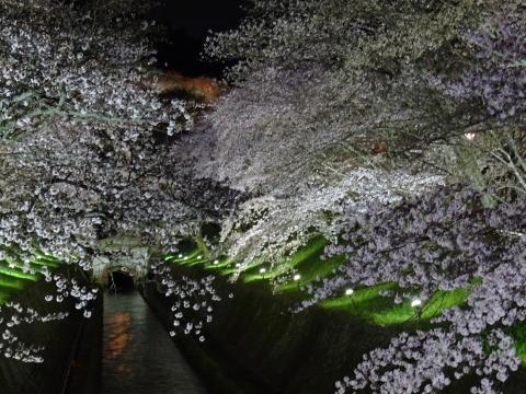 2017年4月9日 琵琶湖疎水