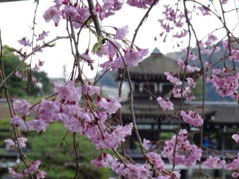 2017年4月12日 平安神宮