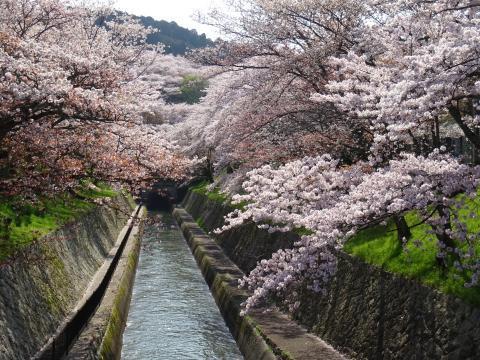 2017年4月14日 琵琶湖疎水