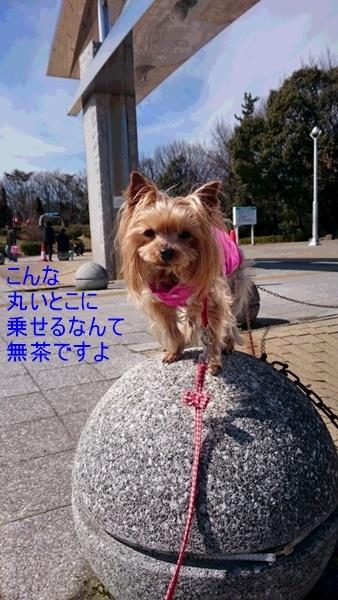 DSC_0401.jpg