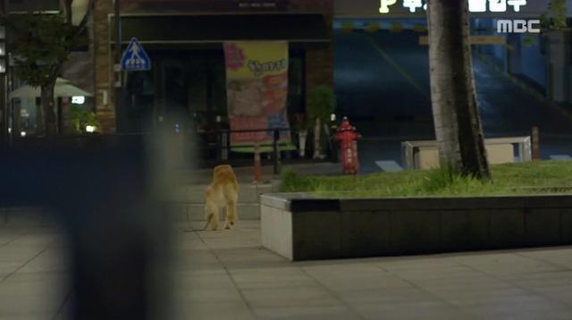 #3コボシ犬-8