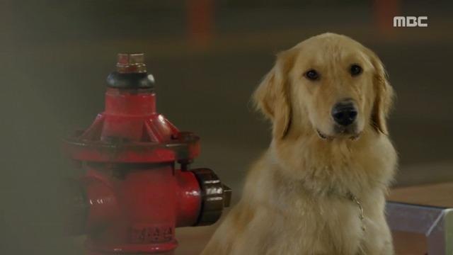 #3コボシ犬-11