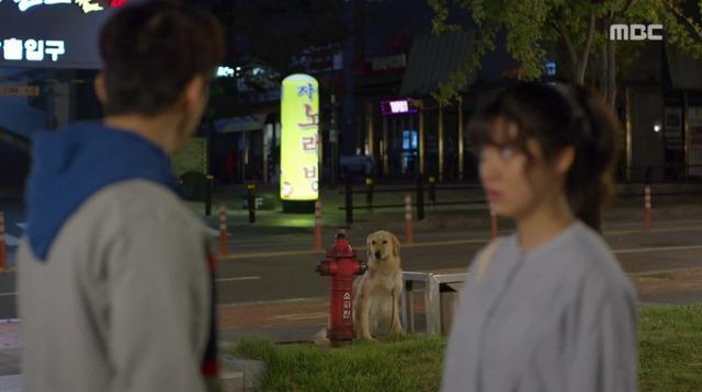 #3コボシ犬-13