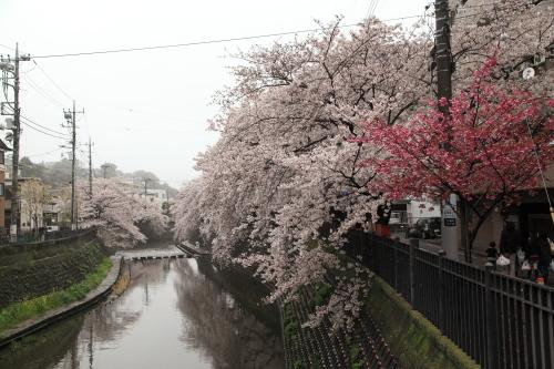 20170409_大岡川_04
