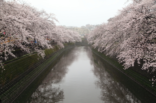 20170409_大岡川_06