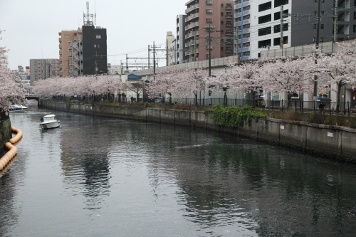 20170409_大岡川_12
