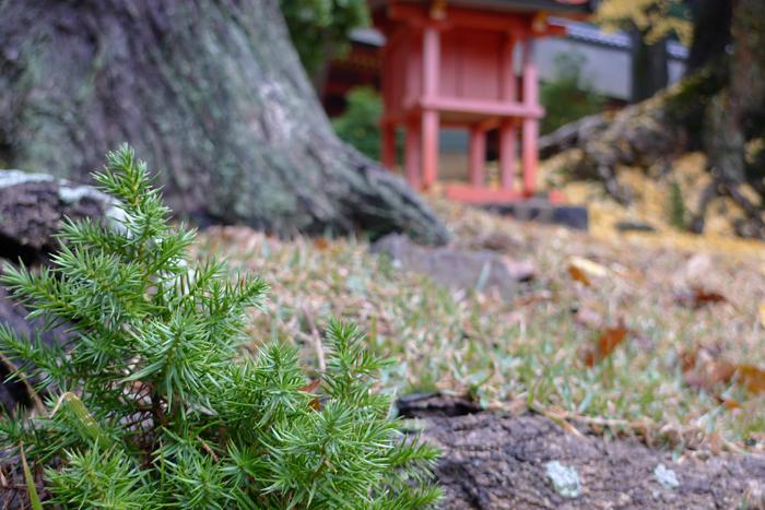 大和の国の神社  春日大社  39