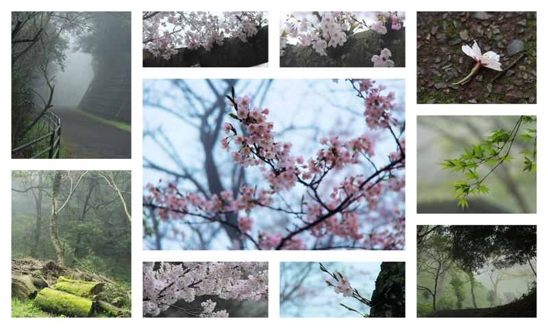 170408霧の桜
