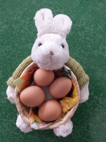 Ostern宝探し1