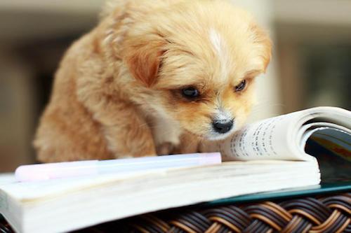 studydog.jpg