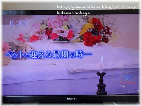 001-テレビ170219-23-2