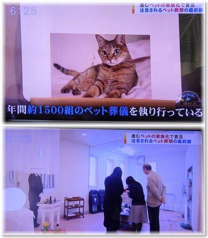 001-テレビ170219-23-4