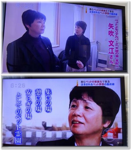 001-1テレビ170219-24-1