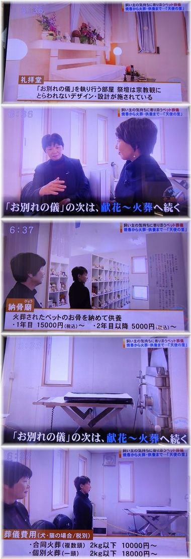 001-4テレビ170219-0224-7