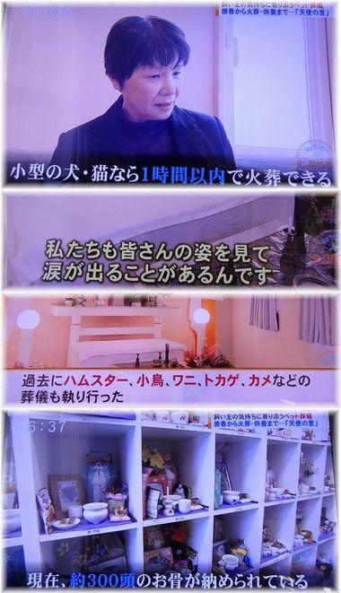 001-5テレビ17021900224-8