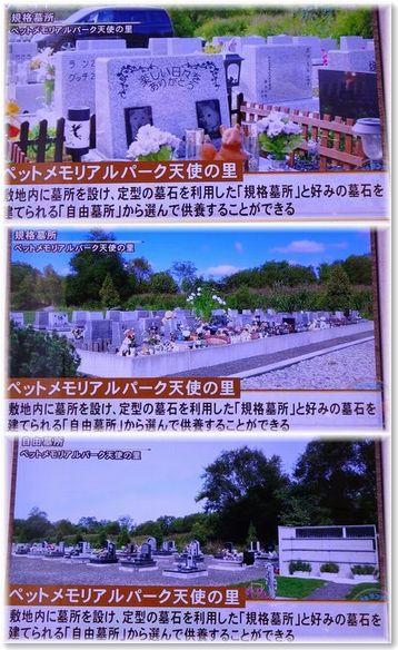 001-テレビ170219-0225-26