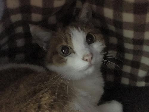 ブログNo.885簡単(寝る時に見た猫と朝見た猫)4