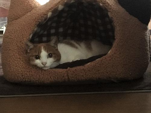 ブログNo.885簡単(寝る時に見た猫と朝見た猫)5