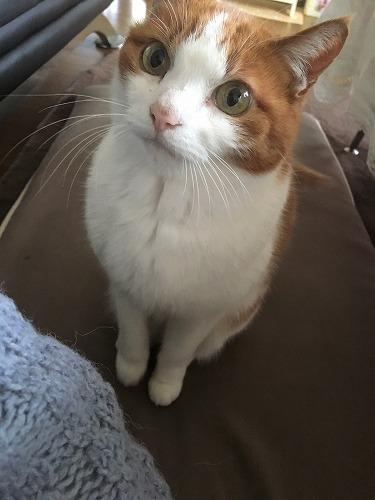 ブログNo.925(発作を知らせる猫)4