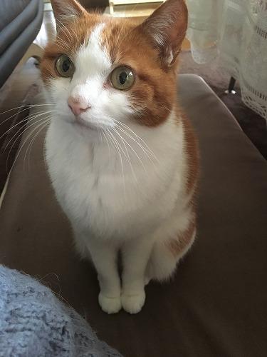 ブログNo.925(発作を知らせる猫)7