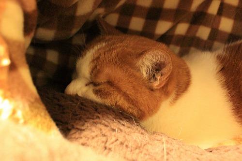 ブログNo.871(それでも入るの?)5