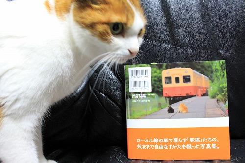 ブログNo.877(ローカル線の駅猫写真集にゃん♪)5