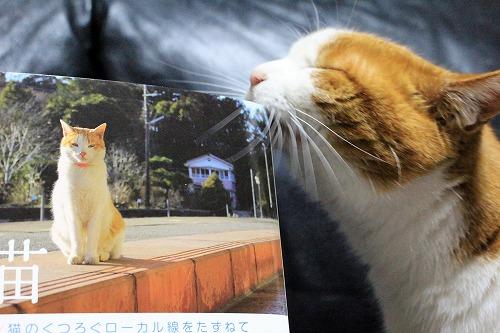 ブログNo.877(ローカル線の駅猫写真集にゃん♪)1