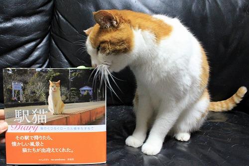 ブログNo.877(ローカル線の駅猫写真集にゃん♪)3
