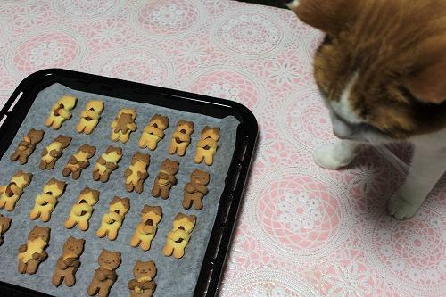 ブログNo.879(にゃんこ型クッキー焼きました♪)2