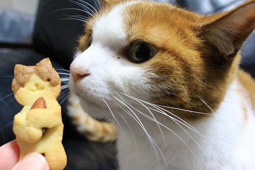 ブログNo.879(にゃんこ型クッキー焼きました♪)4
