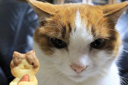ブログNo.879(にゃんこ型クッキー焼きました♪)5