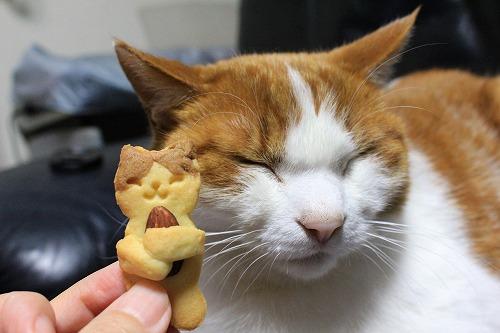 ブログNo.879(にゃんこ型クッキー焼きました♪)6