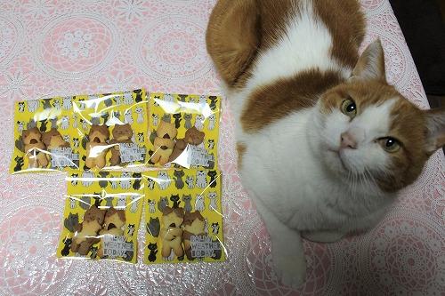 ブログNo.879(にゃんこ型クッキー焼きました♪)7