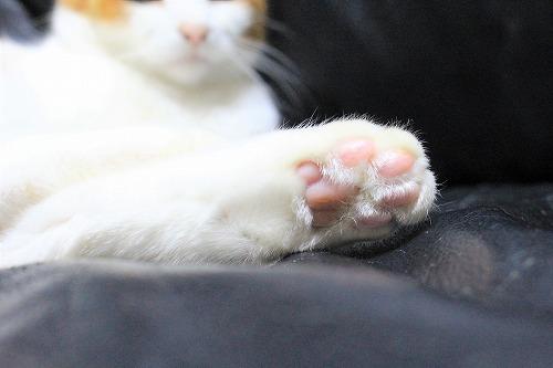 ブログNo.890(遊び疲れた猫)2