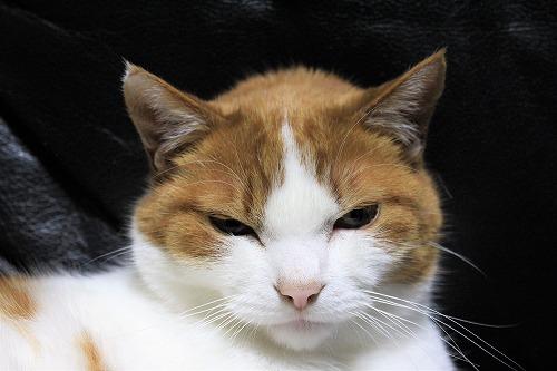 ブログNo.890(遊び疲れた猫)8