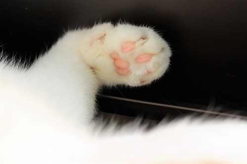ブログNo.895(死んだように眠る猫)3