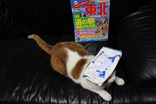 ブログNo.898(じゃらん温泉用タオルにゃん♪)2