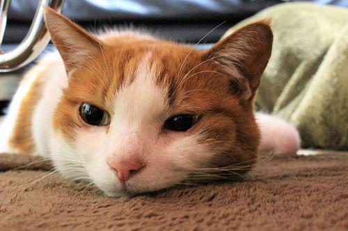 ブログNo.916(お利口さん&潰れ猫&おまけ♪)1