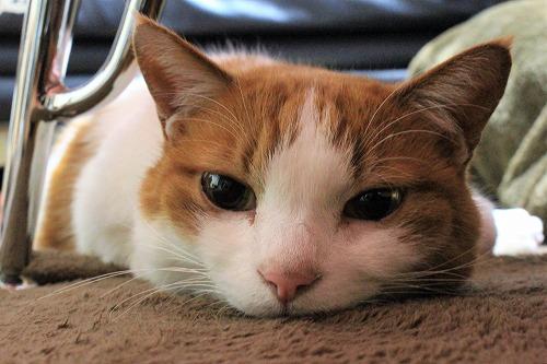 ブログNo.916(お利口さん&潰れ猫&おまけ♪)3