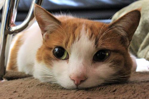 ブログNo.916(お利口さん&潰れ猫&おまけ♪)4